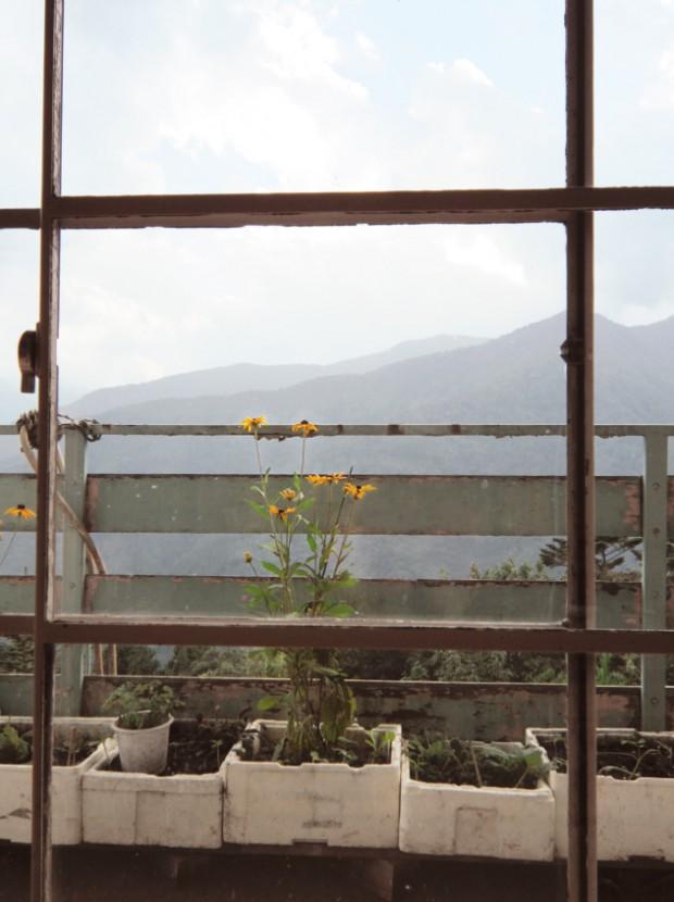 土産物屋の黄色い花 1