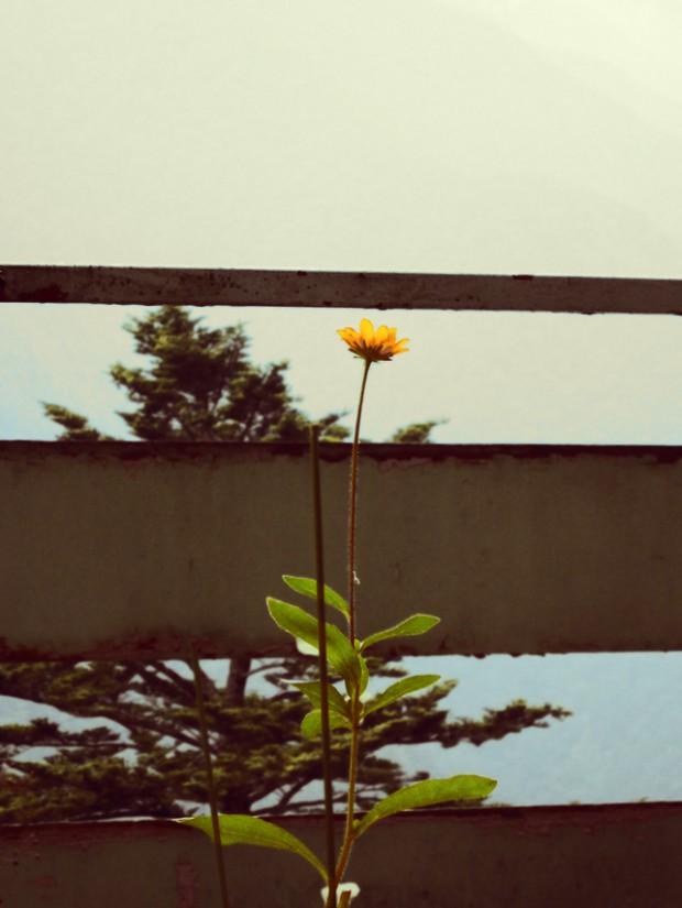 土産物屋の黄色い花 2