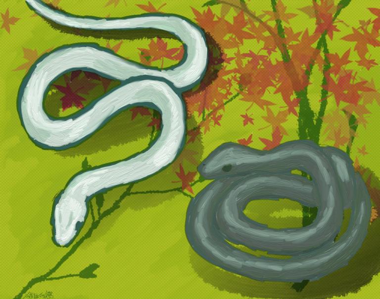 白い蛇と黒い蛇